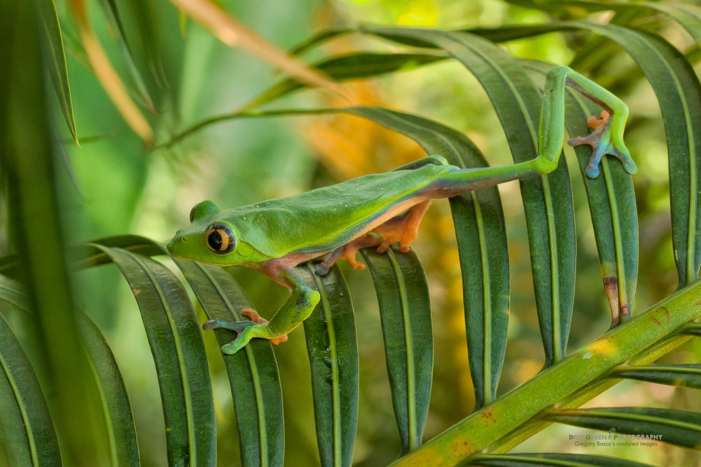 DGPstock-frogs-54.jpg