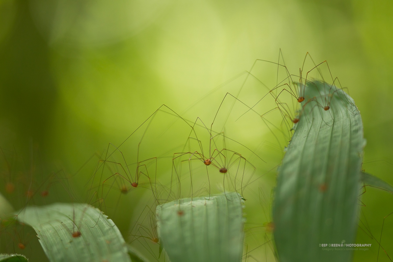 DGPstock-invertebrates-20.jpg