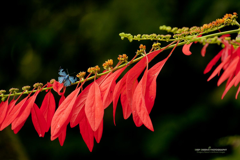 DGPstock-invertebrates-24.jpg