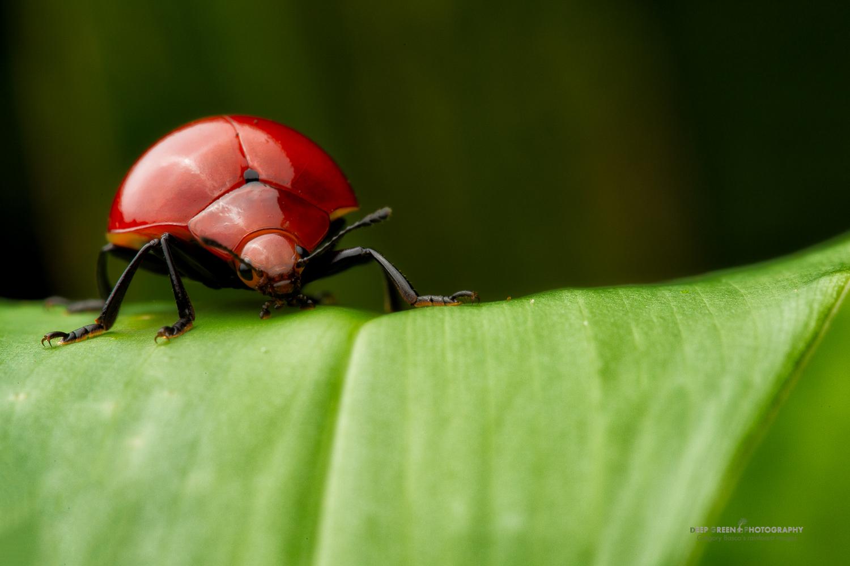 DGPstock-invertebrates-27.jpg