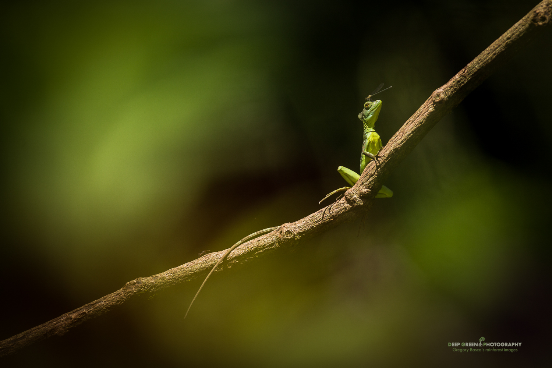 DGPstock-reptiles-20.jpg