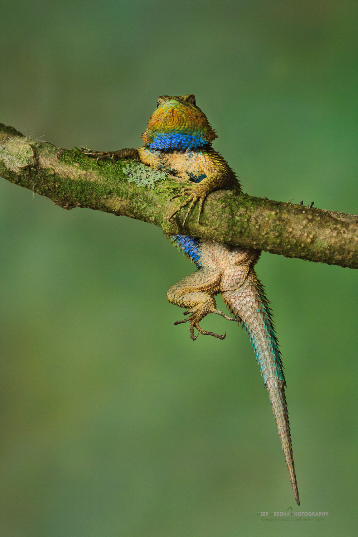 DGPstock-reptiles-61.jpg
