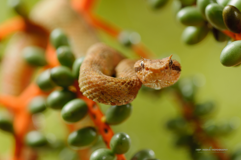 DGPstock-reptiles-66.jpg