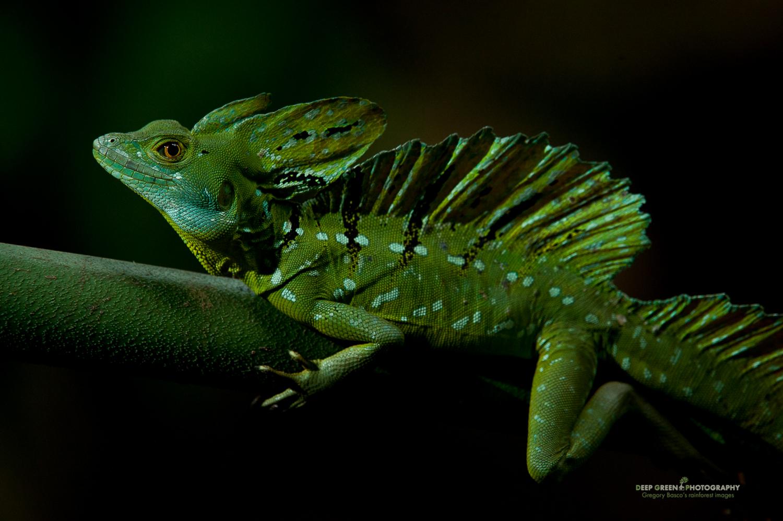 DGPstock-reptiles-68.jpg