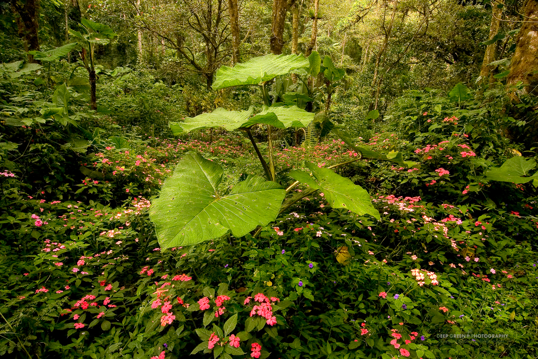 DGP Costa Rica landscapes-23.jpg