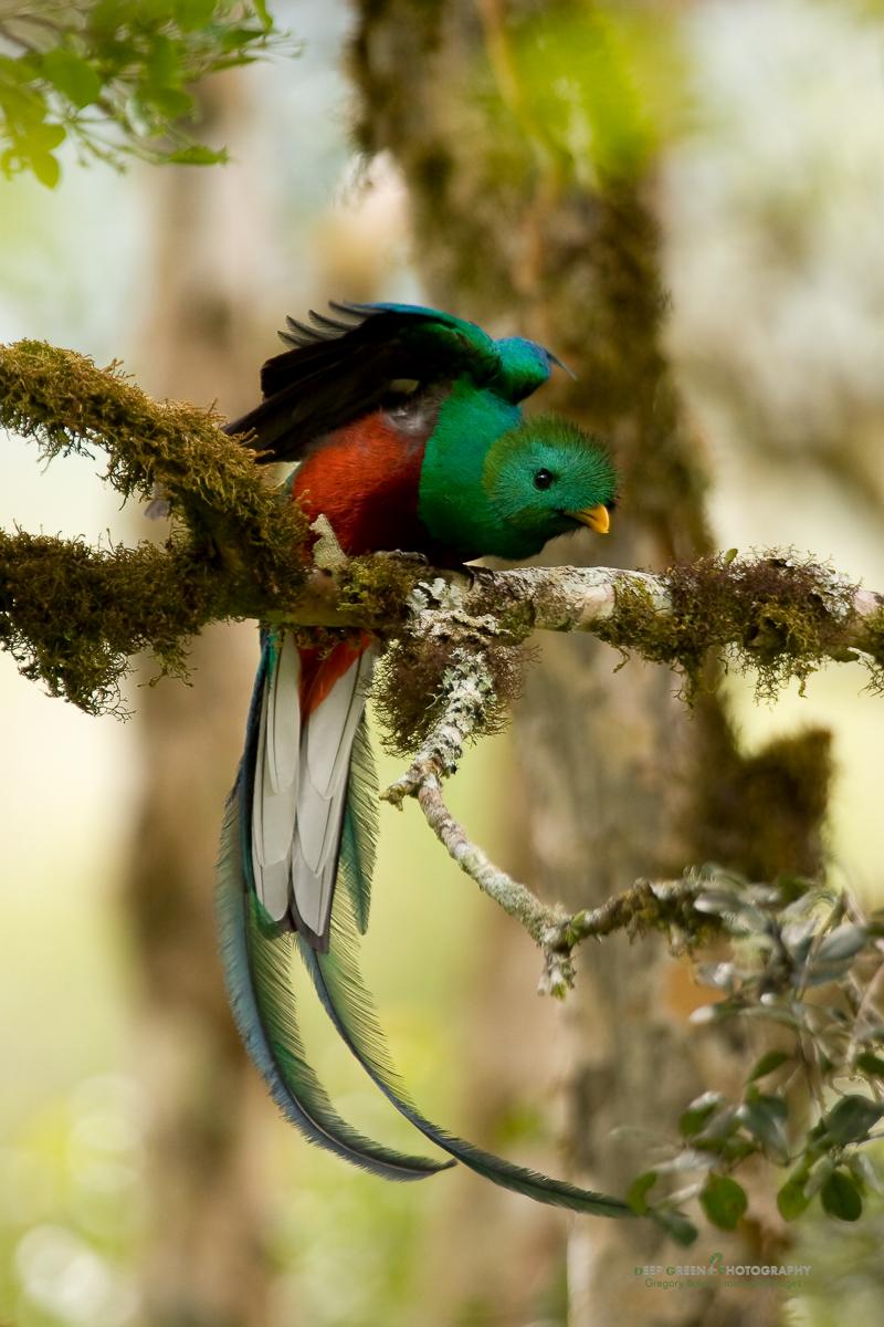 DGPstock-birds-7.jpg