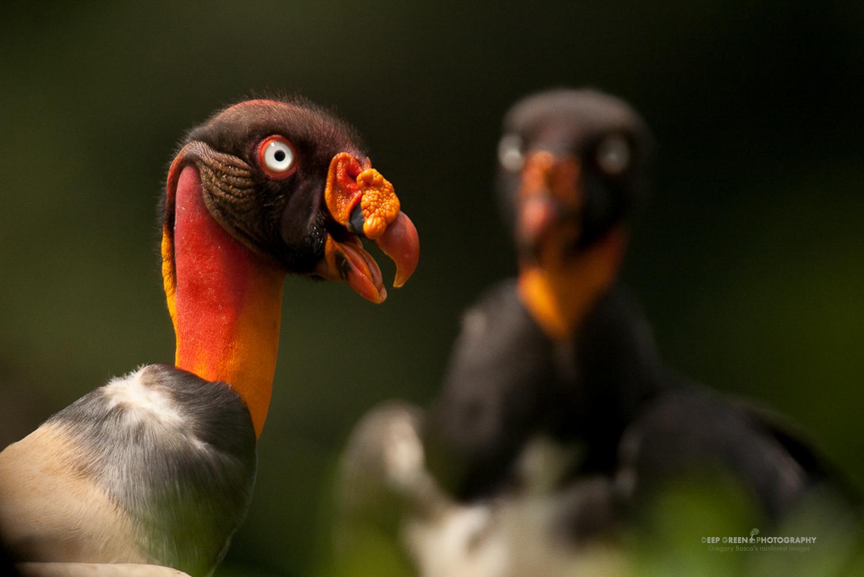 DGPstock-birds-27.jpg