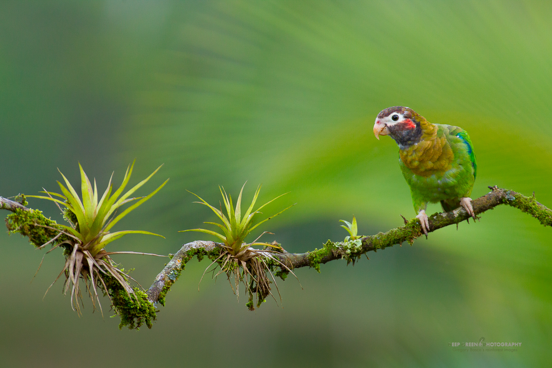 DGPstock-birds-61.jpg