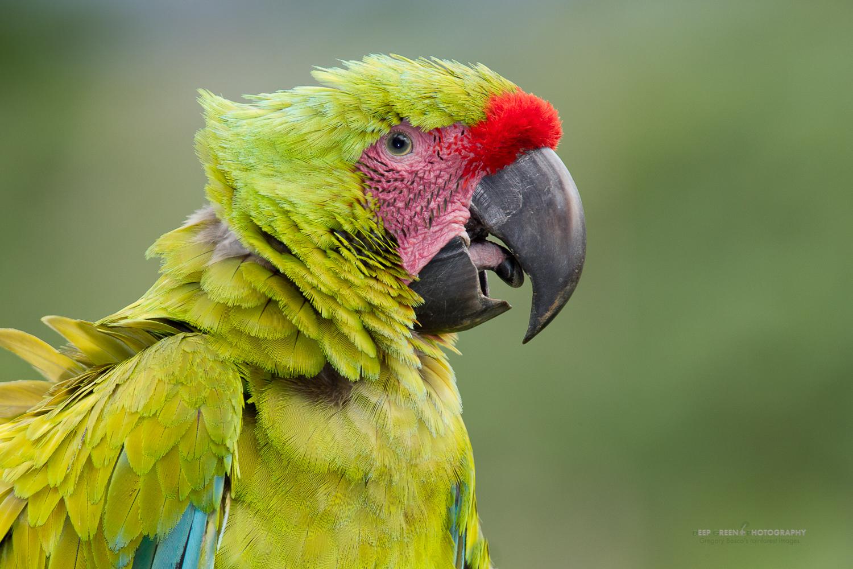DGPstock-birds-63.jpg