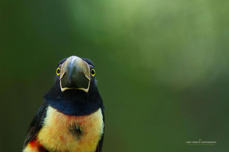 DGPstock-birds-93.jpg