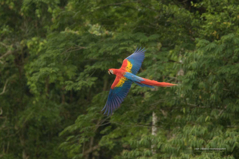 DGPstock-birds-146.jpg