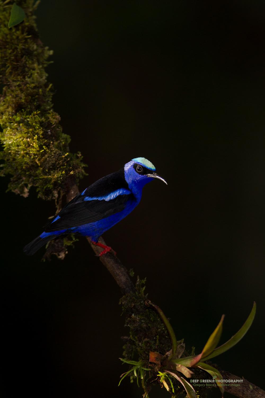 DGPstock-birds-154.jpg