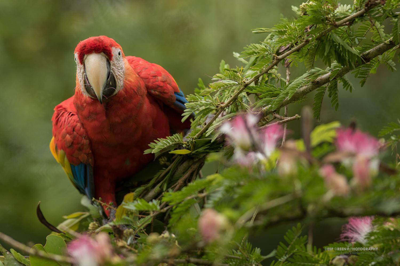 DGPstock-birds-168.jpg