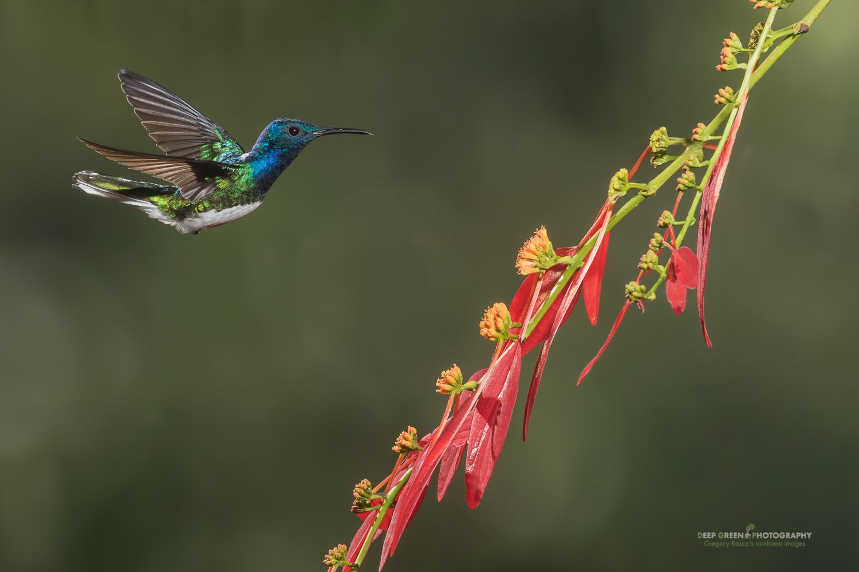 DGPstock-hummingbirds-103.jpg