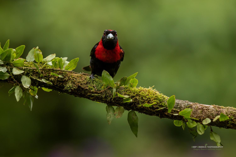 DGPstock-birds-162.jpg