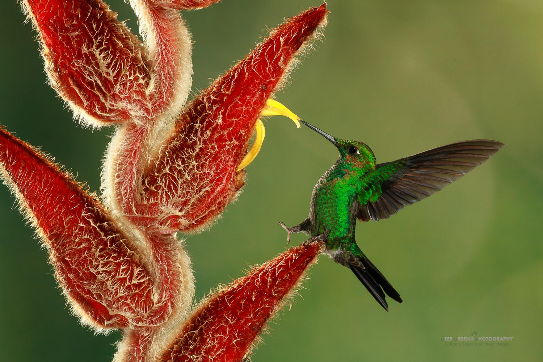 DGPstock-hummingbirds-57.jpg