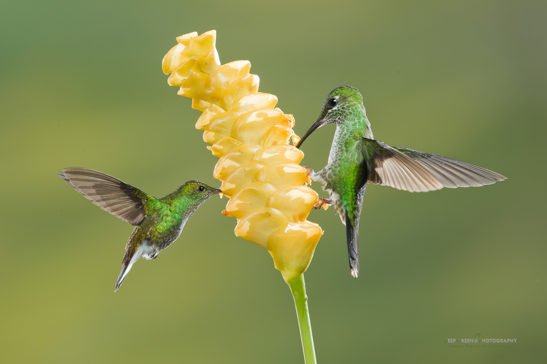 DGPstock-hummingbirds-62.jpg