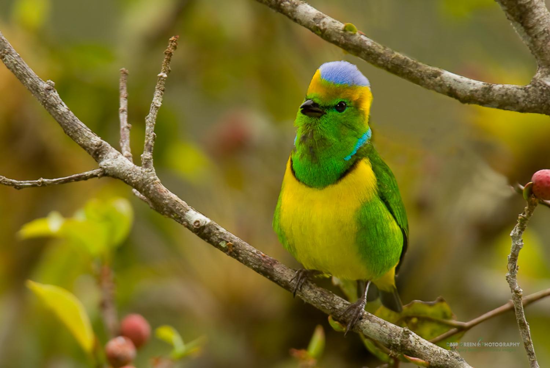DGPstock-birds-10.jpg
