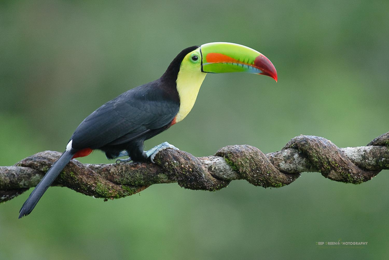 DGPstock-birds-20.jpg