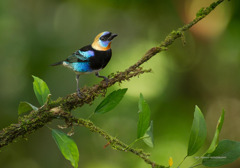DGPstock-birds-120.jpg