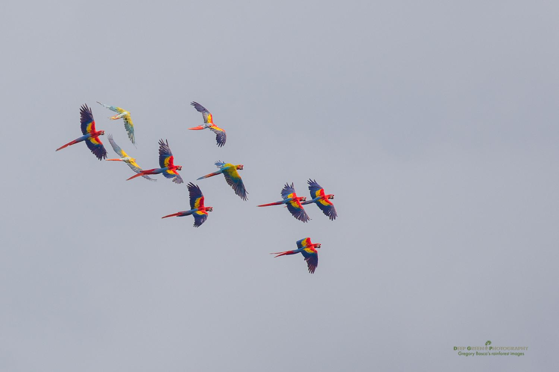 DGPstock-birds-122.jpg