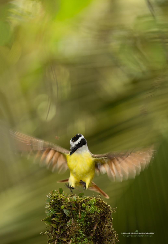 DGPstock-birds-186.jpg