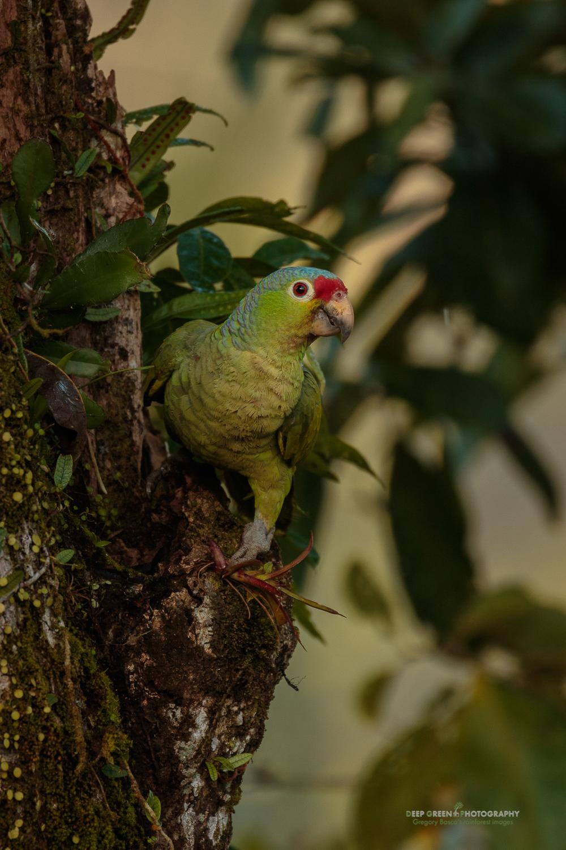 DGPstock-Birds-198.jpg