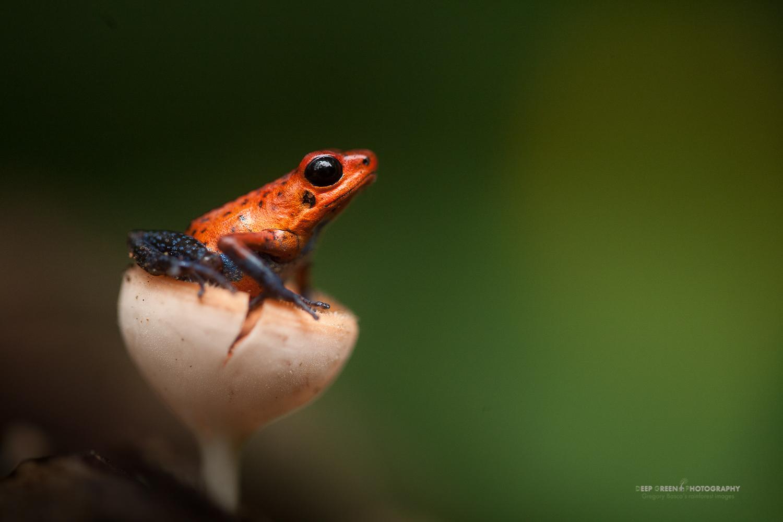 DGPstock-frogs-31.jpg