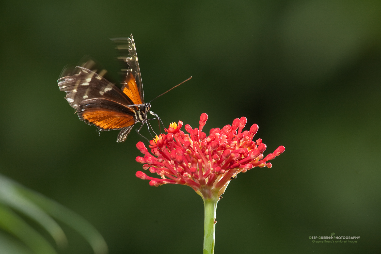 DGPstock-invertebrates-51.jpg