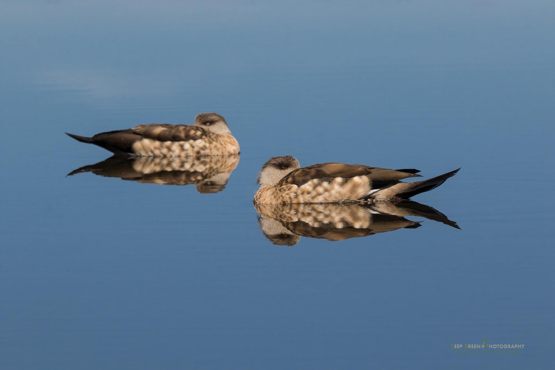 DGPstock-birds-219.jpg