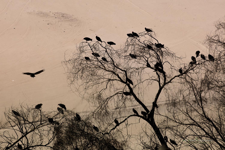 DGPstock-birds-215.jpg