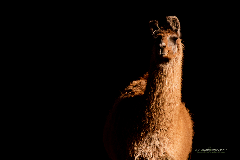 DGPstock-mammals-68.jpg