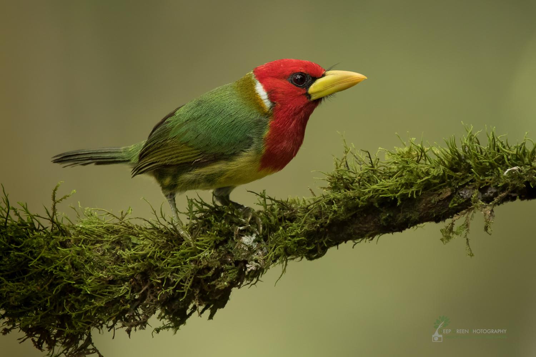 DGP-stock-birds-274.jpg