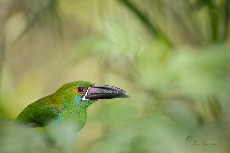 DGP-stock-birds-281.jpg