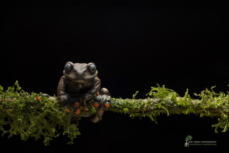 DGP-stock-frogs-76.jpg