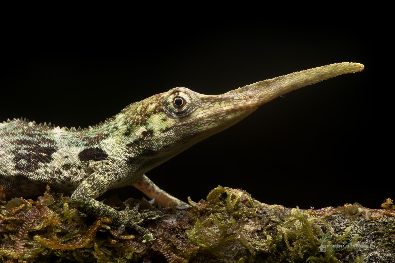 DGPstock-reptiles-113.jpg