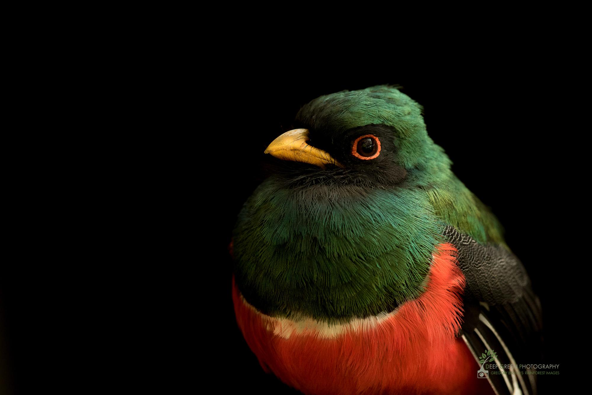 DGP-stock-birds-278.jpg