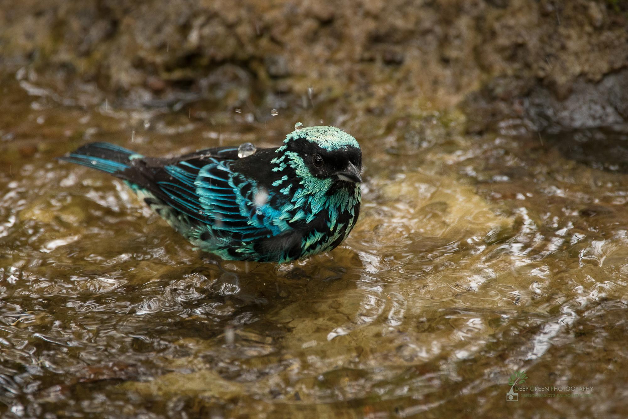 DGP-stock-birds-279.jpg