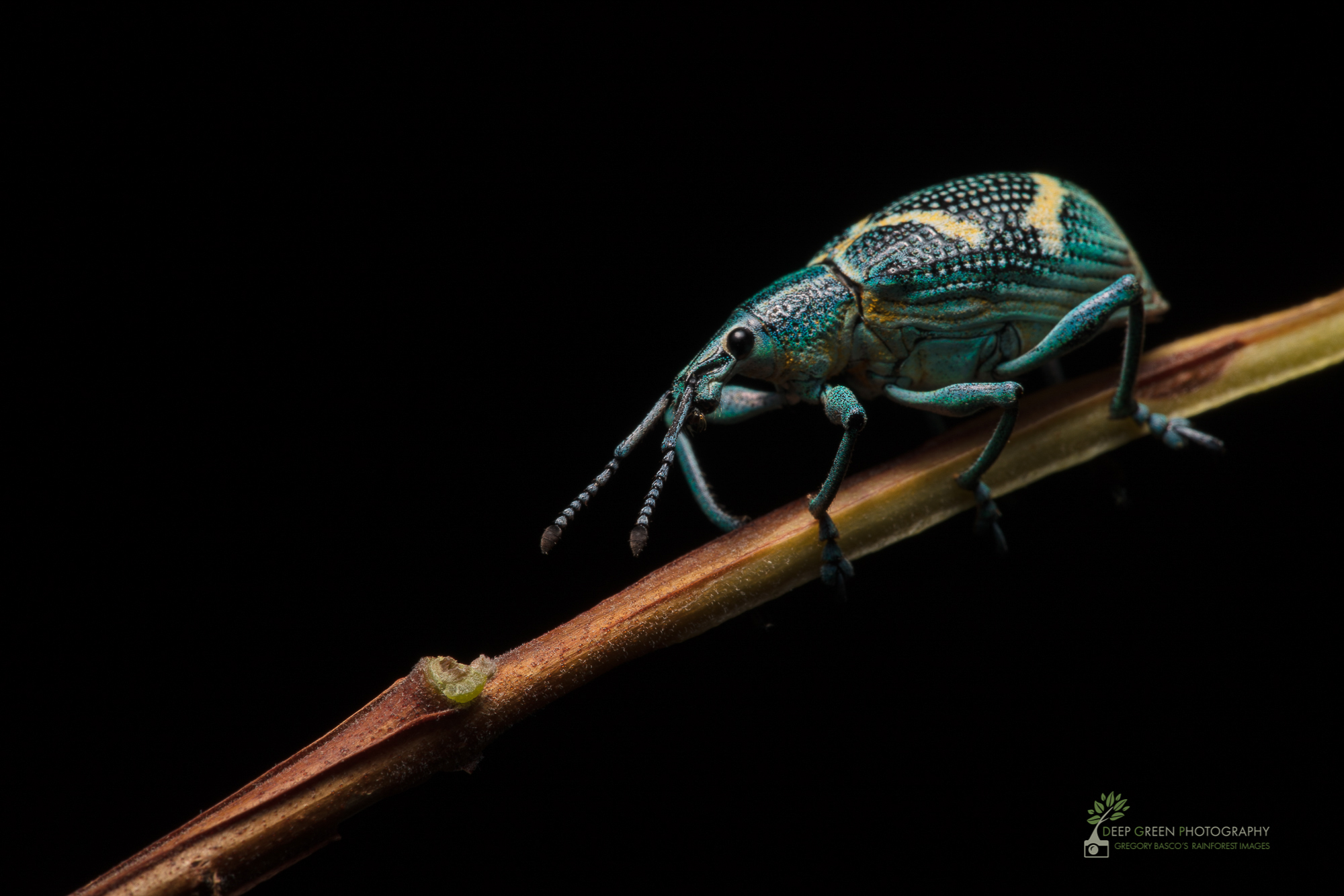 DGP-stock-invertebrates-75.jpg