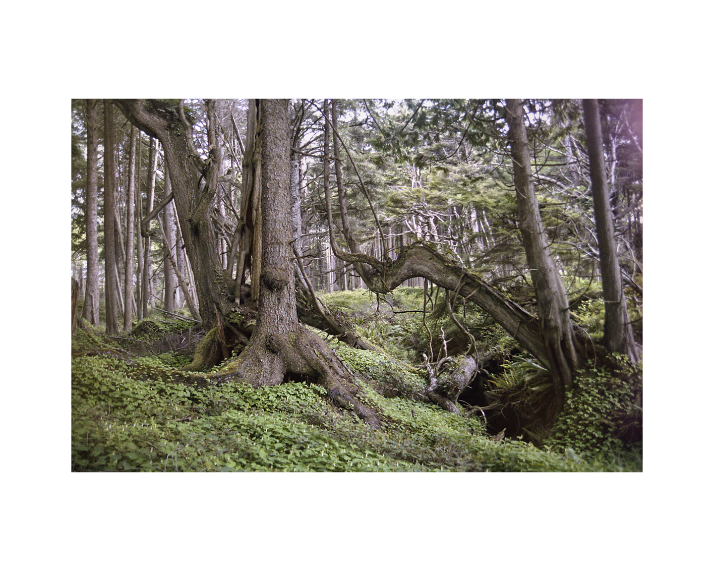 Wonderland - Olympic National Forest