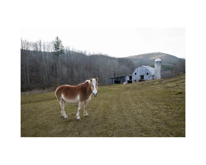 Farm Horse - Somewhere in North Carolina