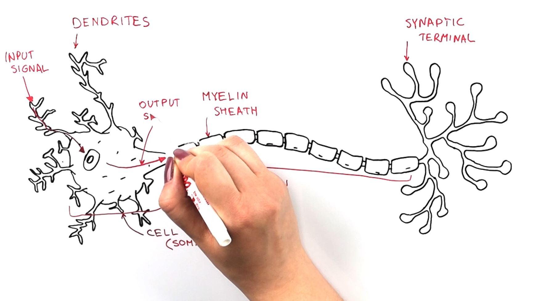 Neuron Thumbnail.JPG