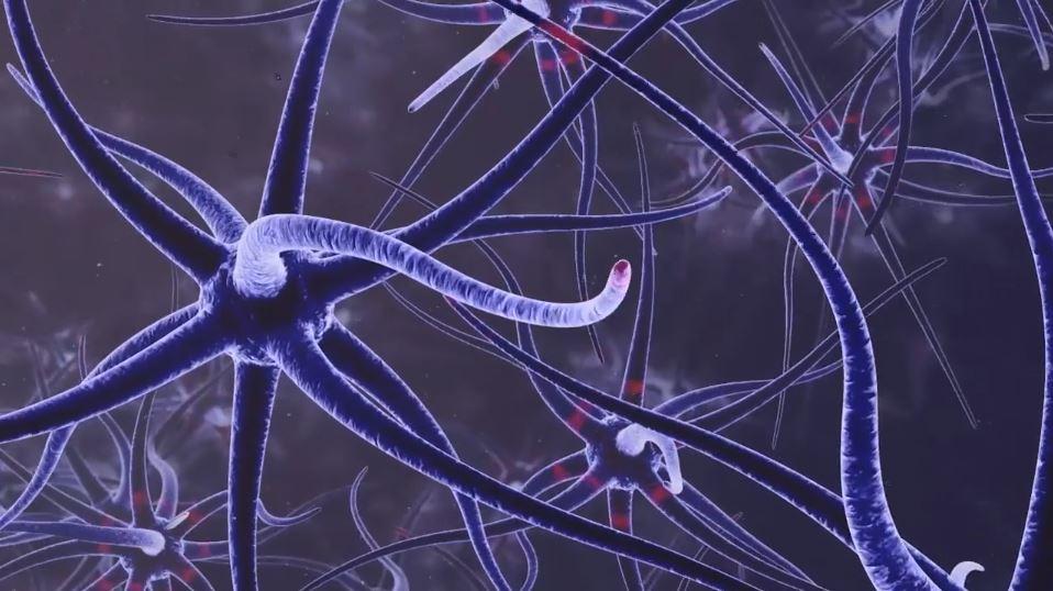 Neuron Thumbnail_2.JPG