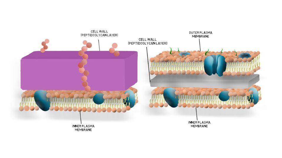 Cell Wall Thumbnail.JPG