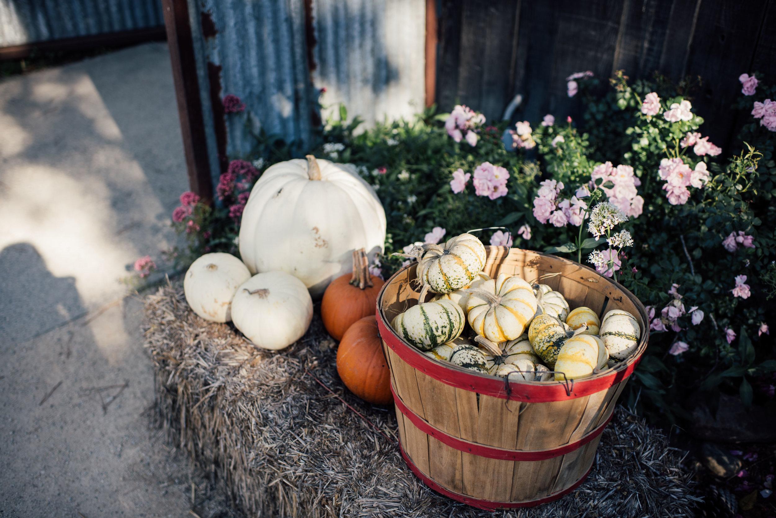 See_Canyon_Fruit_Ranch-31.jpg