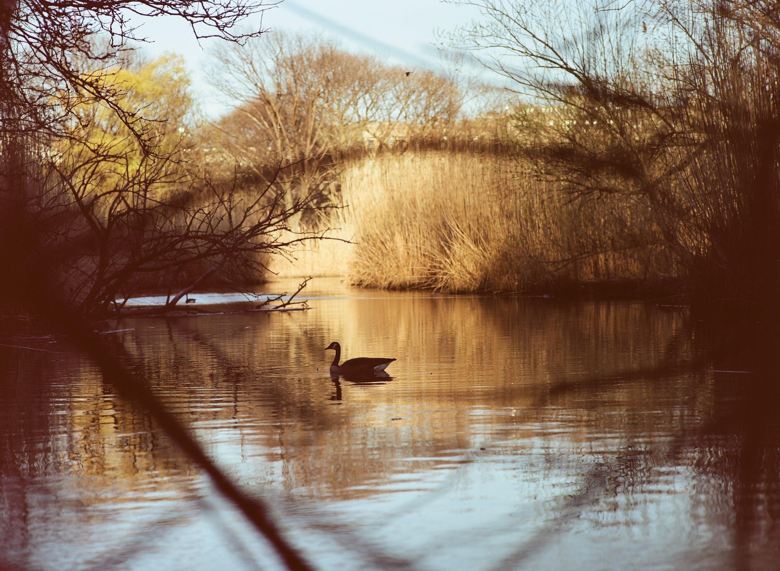 Shot on Kodak Portra 160