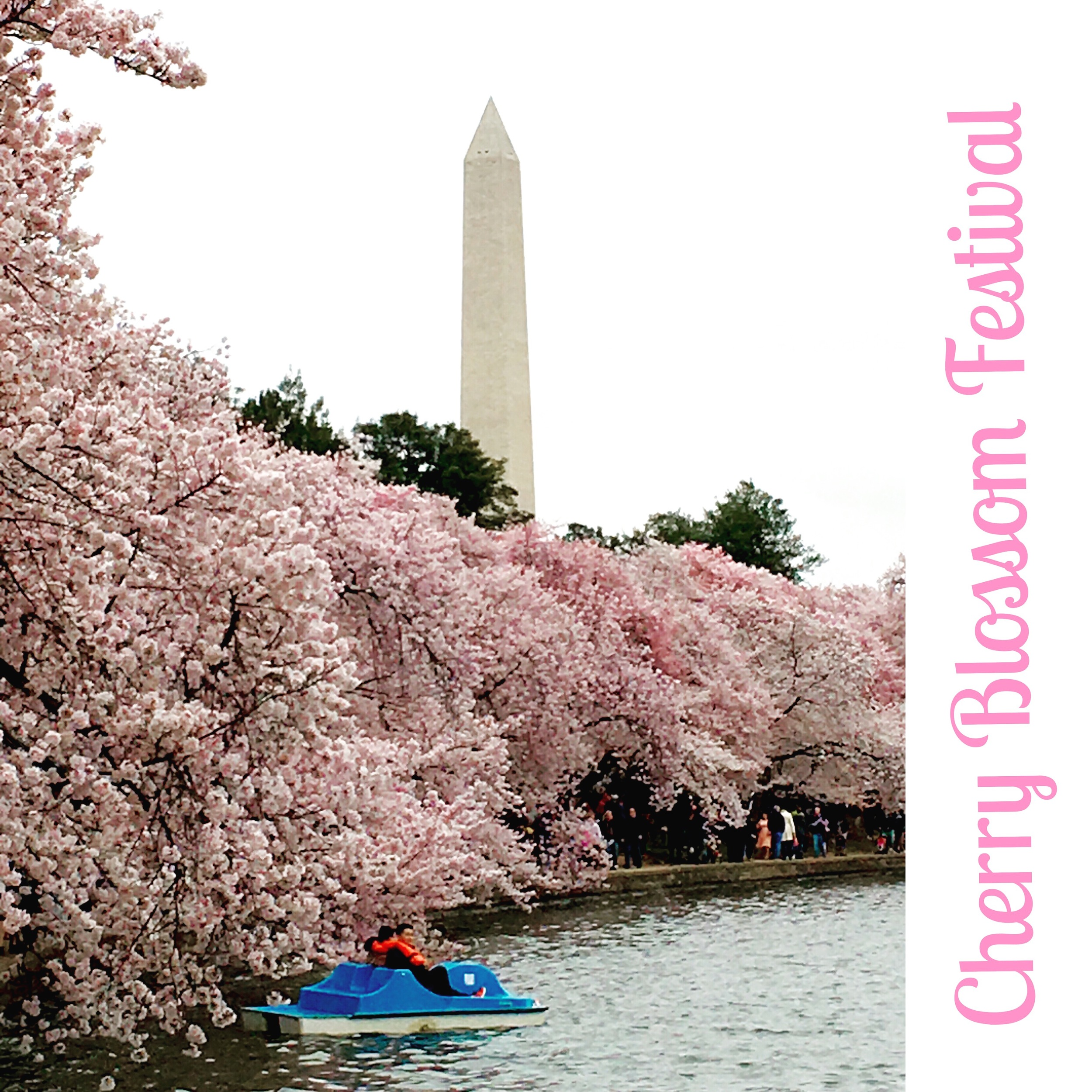 washington-dc-cherry-blossoms-a-peach-life