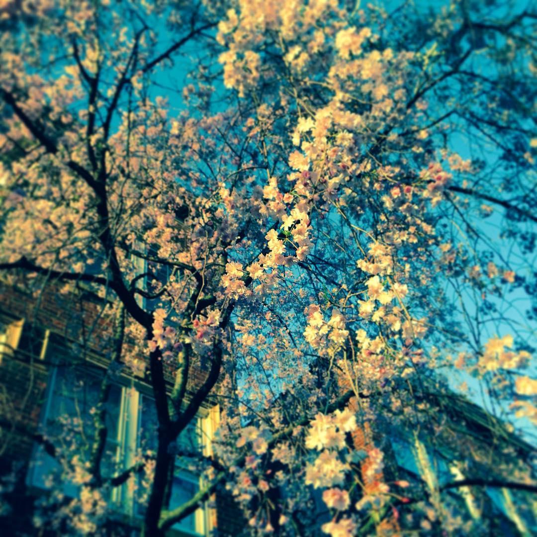 Spring! #demun #blossoms
