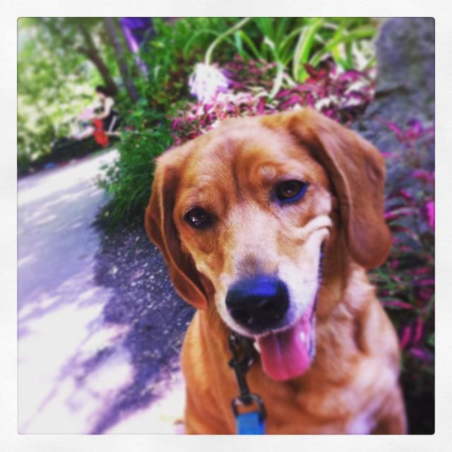 Hannah needed her picture taken. #zoodog #stlzoo #khakishorts