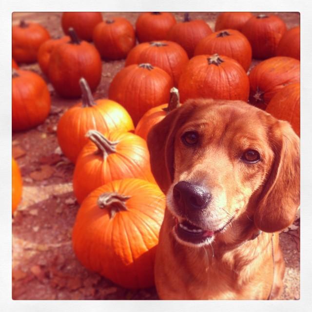Happy Halloween from Hannah!